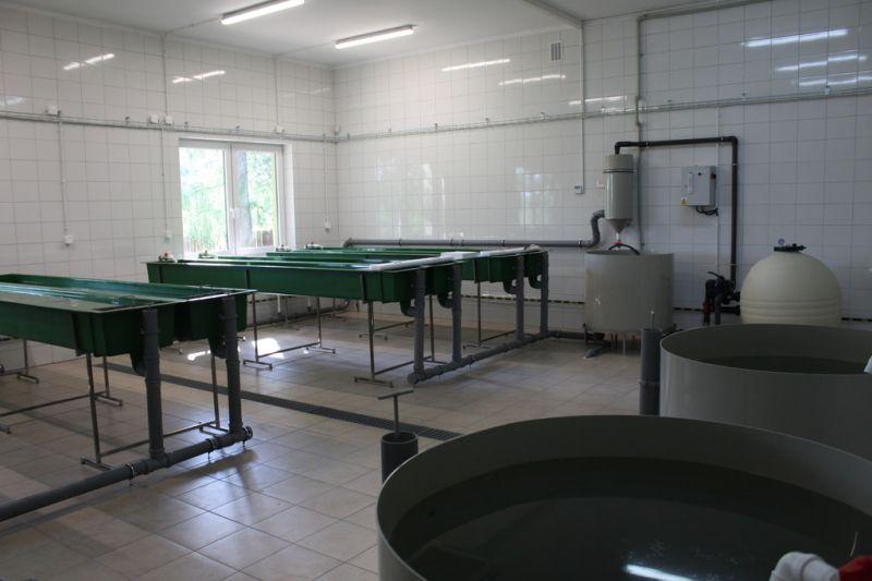 Wylęgarnia ryb i raków w Augustowie