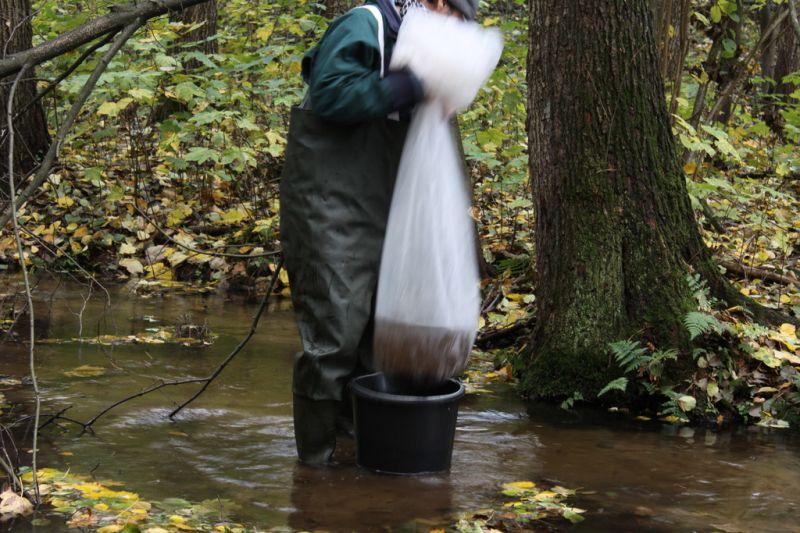 09_ Wypuszczanie wyhodowanych raków do cieku wodnego na terenie Kozienickiego Parku Krajobrazowego