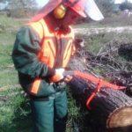 Kurs - Operator pilarki mechanicznej do ścinki drzew